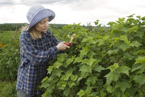 Farming Grants Amp Scholarships For Women In Agriculture